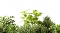 """Glasnische HER Motiv """"Herbs"""""""